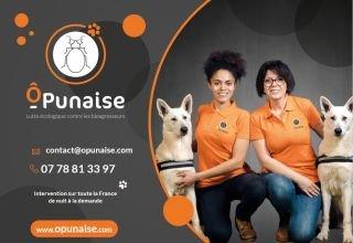 Détection canine de punaises lit Ô PUNAISE